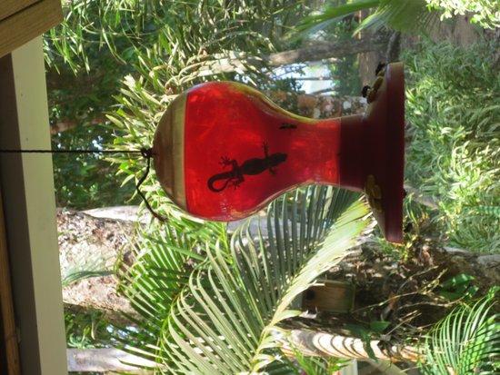 Playa Bluff Lodge: gecko on a bird feeder