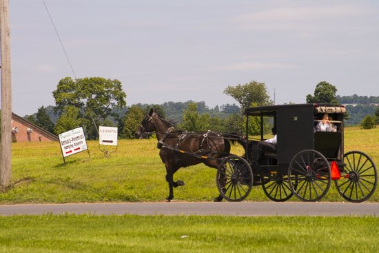 Artist's Inn and Gallery : Mennonite buggy.