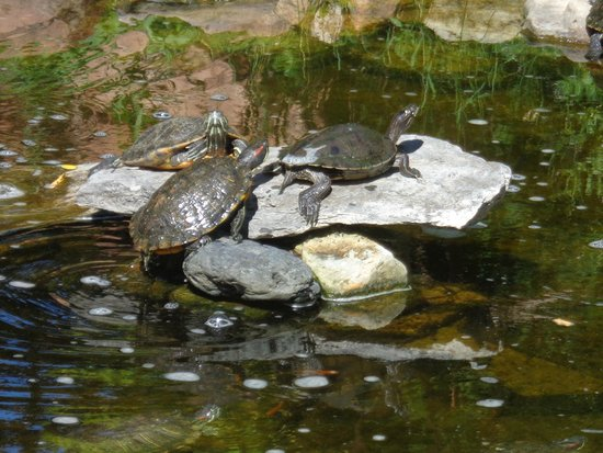 Reptile Gardens: Little turtles