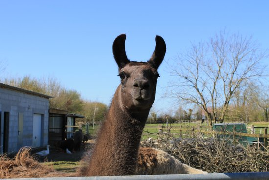 Esme, just one of the friendly creatures on the property