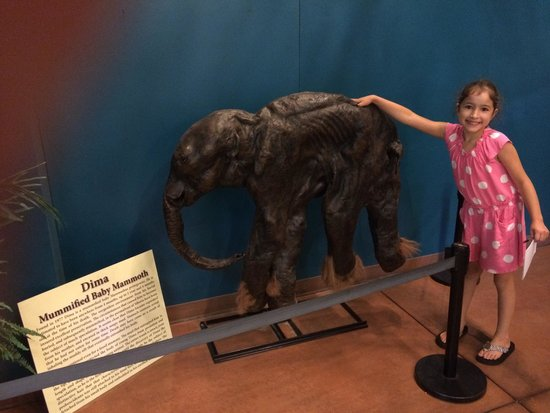 Rocky Mountain Dinosaur Resource Center: Actual baby mammoth