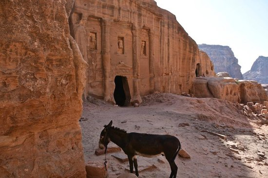 Movenpick Resort Petra : Wadi Farasa