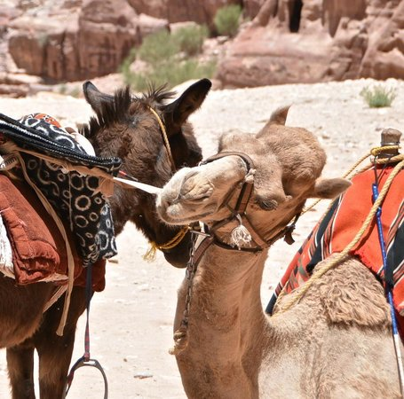 "Movenpick Resort Petra : the ""rides"""