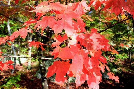 Hawksbill Crag: Beautiful fall colors along the trail.