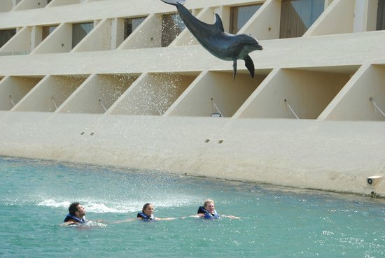 Delphinus Punta Cancun: Dolphin jumping over us