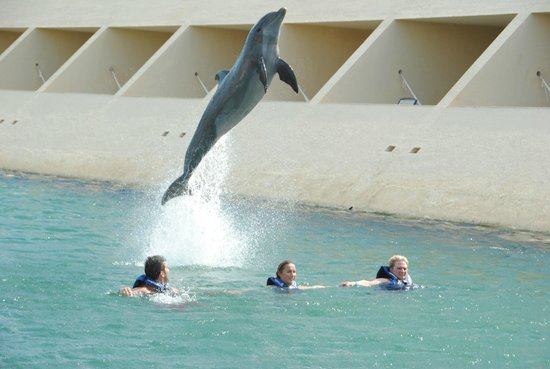 Delphinus Punta Cancun: Dolphin jumping over us...
