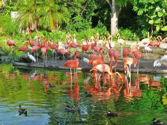 Zoo Miami: The gorgeous flamingos