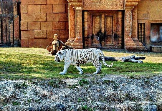 Zoo Miami: The amazing white Bengal tiger