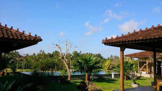 Dalem Agung Kencono: Joglo and swimming pool