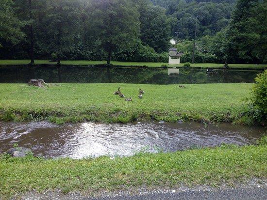 Alliat, Prancis: Patos en el lago