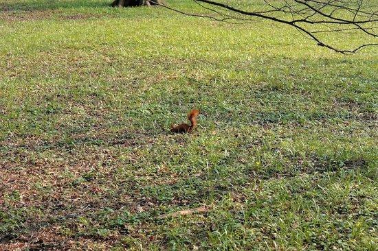 Parc Łazienki : Another one squirrel in Lazienki Park