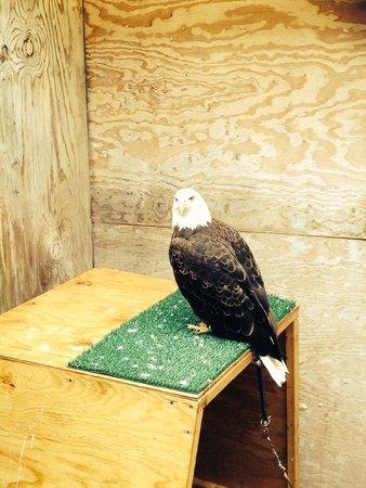 The Raptor Center: Eagle 2