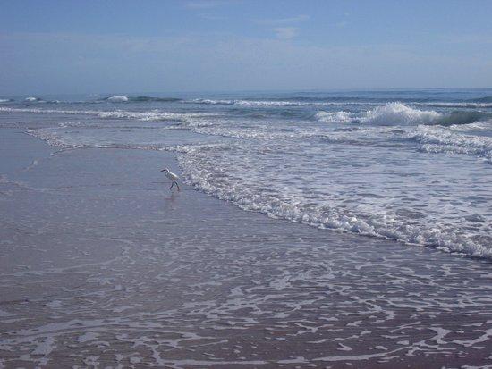 Beach at Daytona Beach: Daytona Beach