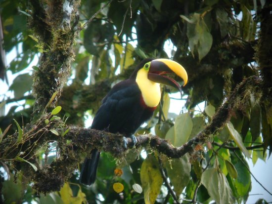 Rubby Hostal: Toucan