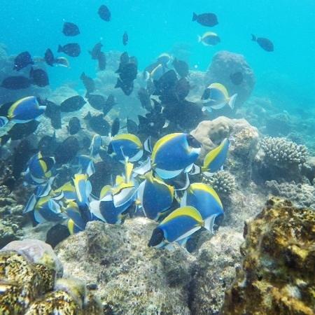 COMO Maalifushi, The Maldives : house reef