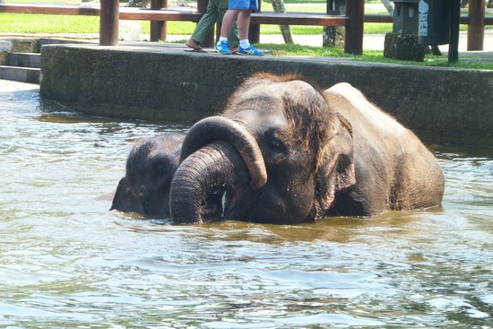 Bali Adventure Tours: Mother and Baby playing in the water