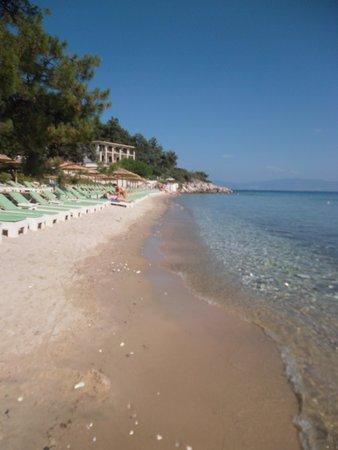 Villa Morfeas: Η παραλία