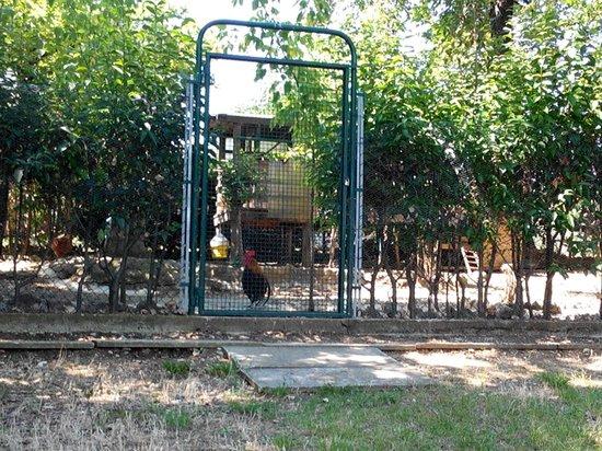 Garden Village San Marino : Le galline