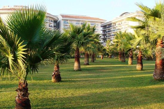 Sunconnect Sea World Resort & Spa: Las palmowy :)