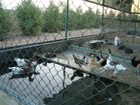 JA Hatta Fort Hotel : zoo
