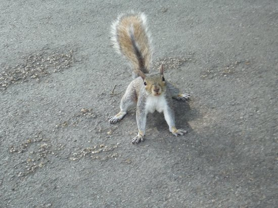 Hyde Park: What you looking at?