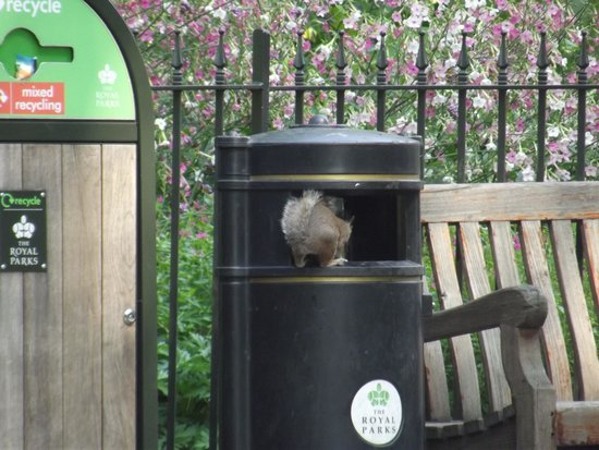 Hyde Park: I'm sure I left it here.