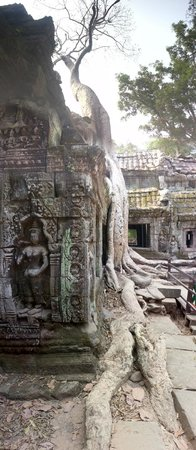 Ta Prohm: Temple and Tree