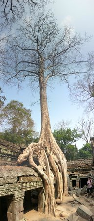 Ta Prohm: Awesome Trees