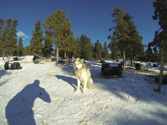 Sky High Wilderness Ranch: Hundehütten