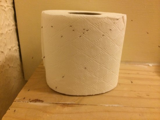 The Farnborough: Spider infested toilet rolls in the bathroom