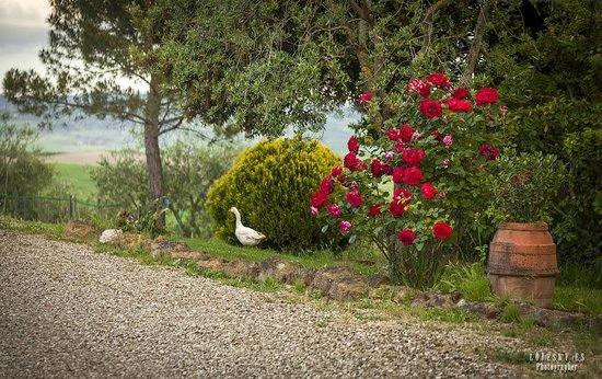 Agriturismo La Buca: Podere La Buca