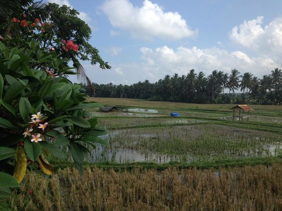Lodtunduh Sari : View on the ricefields (just behind the pool)