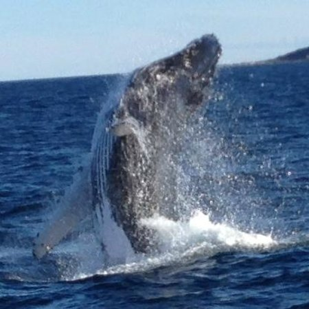 Jervis Bay Wild Cruises: whale during Jervis Bay Wild