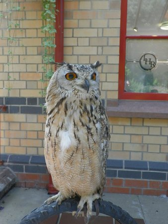 Lakeside & Haverthwaite Steam Railway: Elmo Owl I think he looks like the guy from the Brush Stocks TV series
