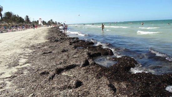 Hotel & Club Lella Meriam : Brzeg morza i pryzmy alg