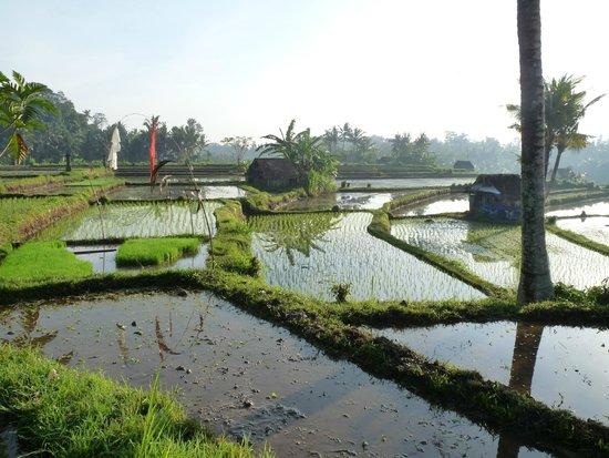 Puri Taman Sari: Reisfelder in der Nähe des Hotels