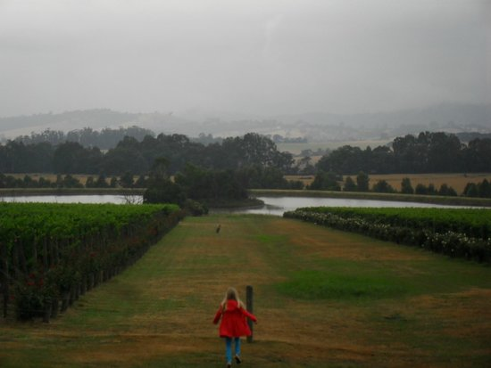 Domaine Chandon: The view on a gloomy day