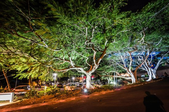 Chateau Royal Beach Resort And Spa: Trees in the entrance way
