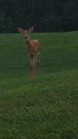 Deer, spotted on the approach to the hotel.