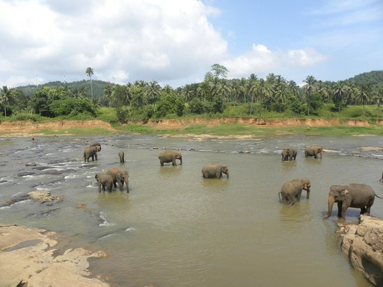Pinnawala Elephant Orphanage: View from the side