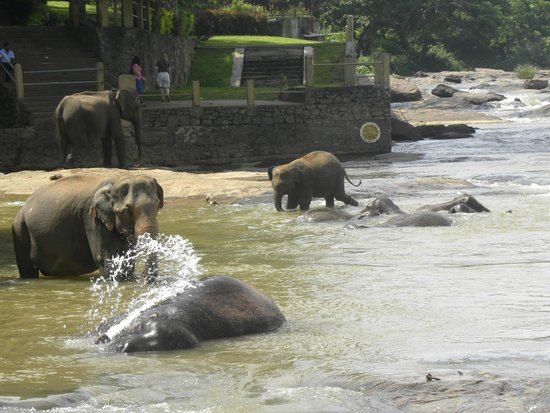 Pinnawala Elephant Orphanage: Washing