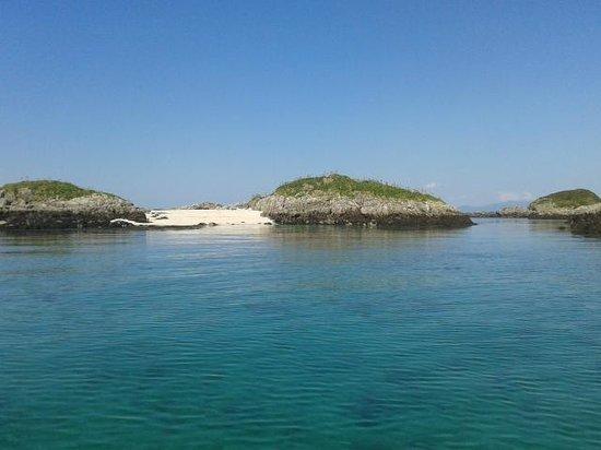 Basking Shark Scotland: Look at that white sand