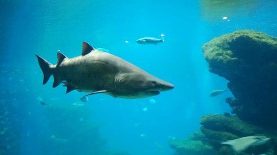 Palma Aquarium: Gli squali a Palma Acquarium