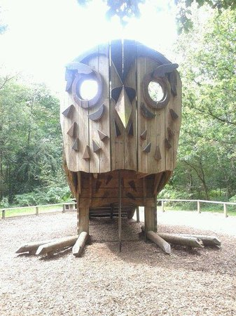 Alice Holt Forest : Big owl, one of four play sculptures.