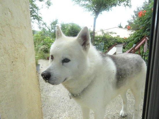 La Charlotte Aix en Provence: cane