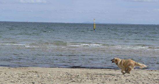 St. Kilda Beach: dog enjoying