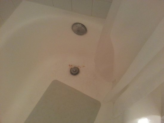 Town and Country San Diego : What look like spots of blood around the plughole in the tub. Actually it's rust.