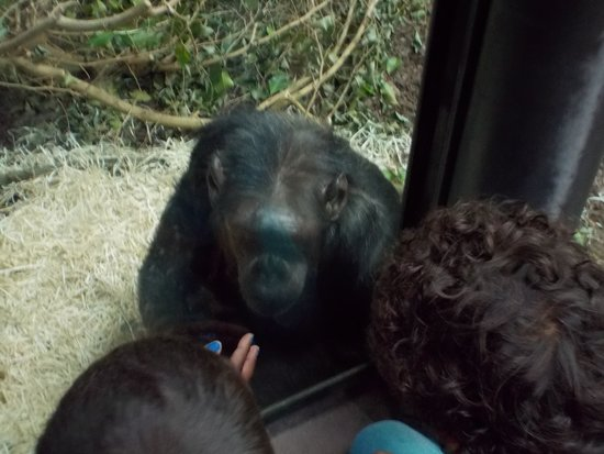 Copenhagen Zoo: 3 apekatter.