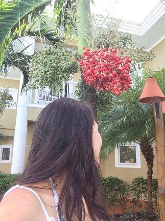 Hotel Coral Beach: Coqueiros
