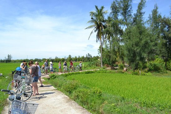 Heaven and Earth Bicycle Tours : The ride through the rice paddies